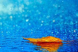 pluie dans les landes