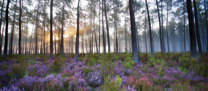 Forêt landaise-Saint Jean de Marsacq-L'Expression