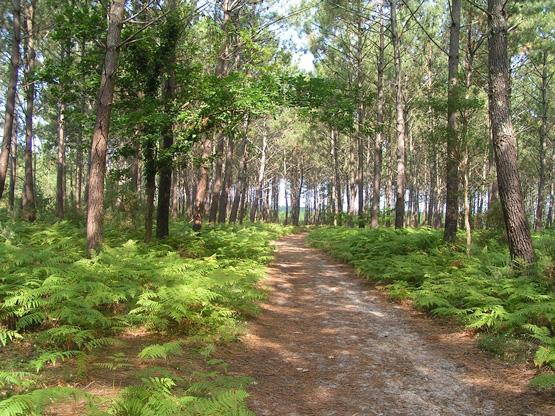 Messanges-forêt landaise-randonnée