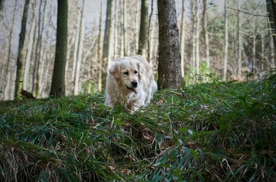 Couverture article promenade dog-friendly-landes