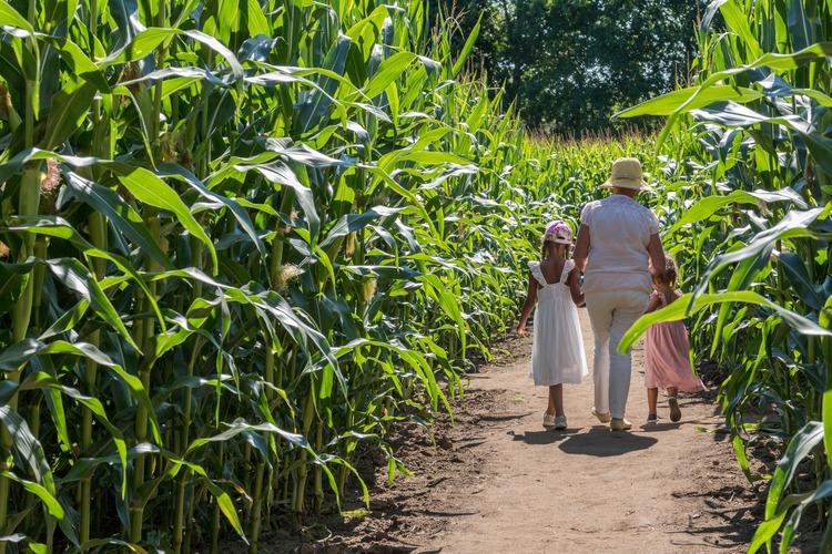 enfants-mamy-pop-corn-labyrinthe-web-min