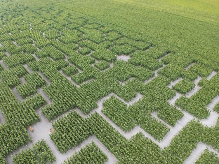 vue-aérienne-3-pop-corn-labyrinthe-web-min