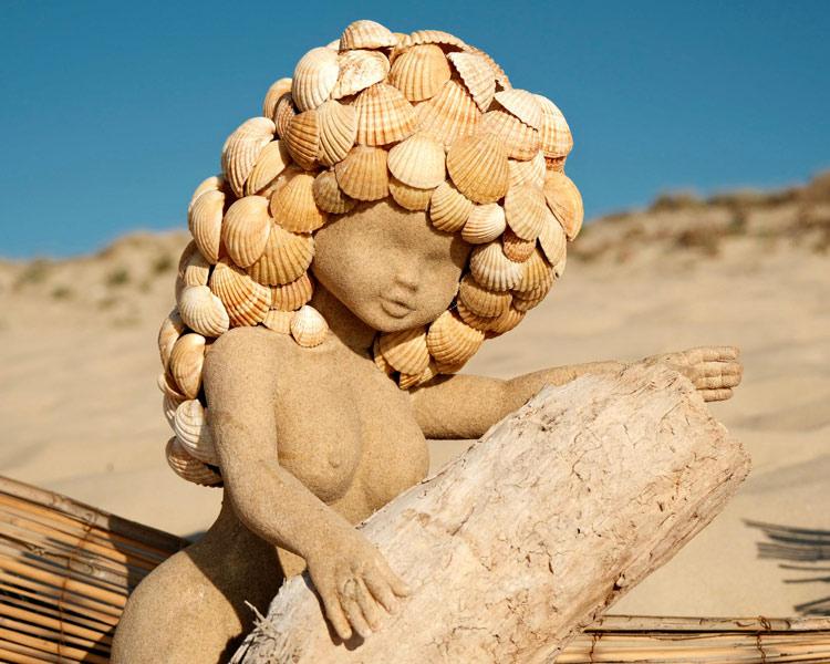 Coquillages dunes plage vieux boucau