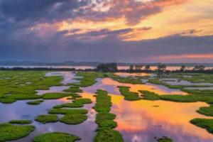Vue du marais d'Orx- couverture